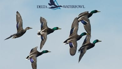 Photo of Delta Waterfowl Applauds Senate Passage of the Great American Outdoors Act